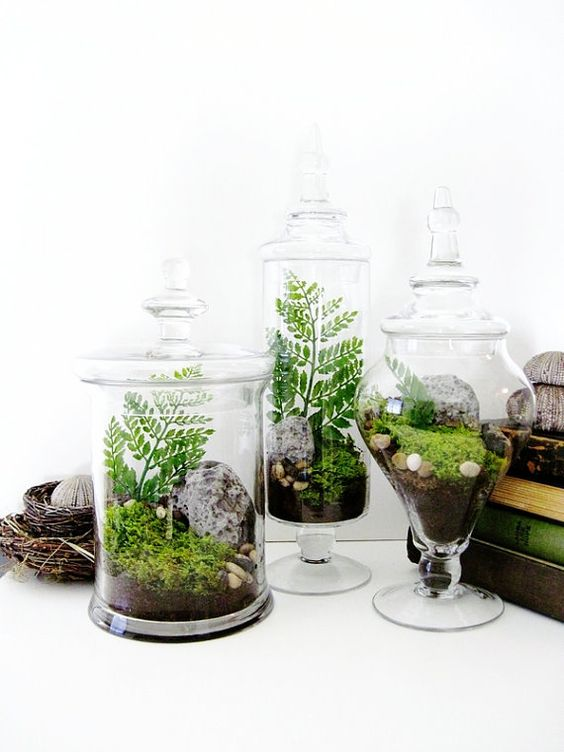 plantas2