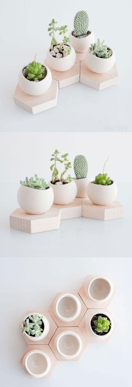 plantas5